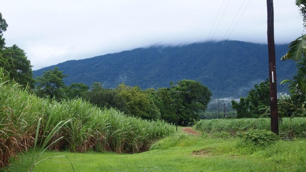 Outside the Rainforest